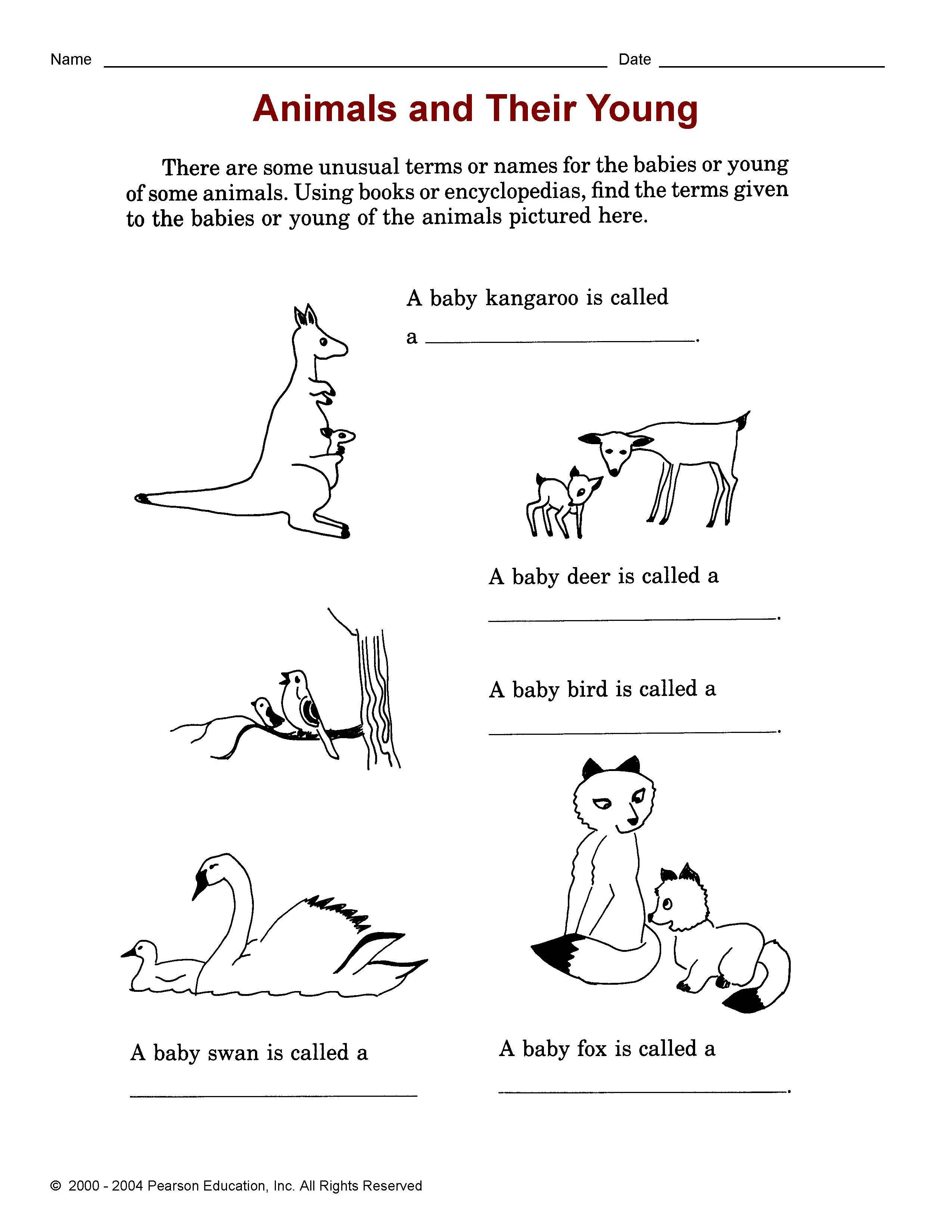 Английский язык рассказ про животного 4 класс
