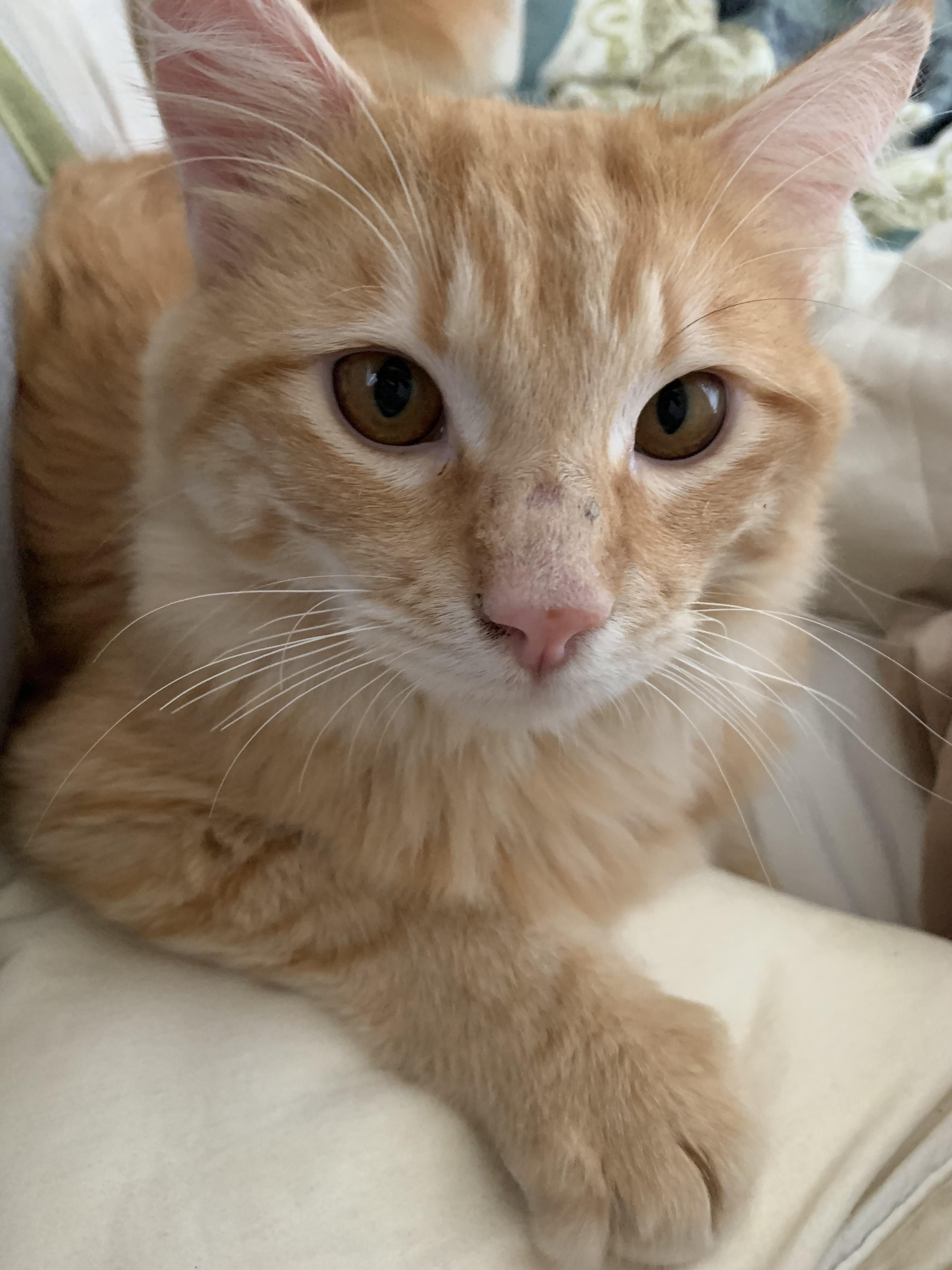 Cute Cate Cute Cats Cute Cats Kittens Cats