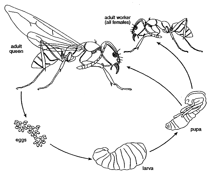 Diagram Ant Nest Diagram