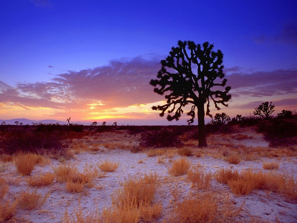 Mojaven autiomaa