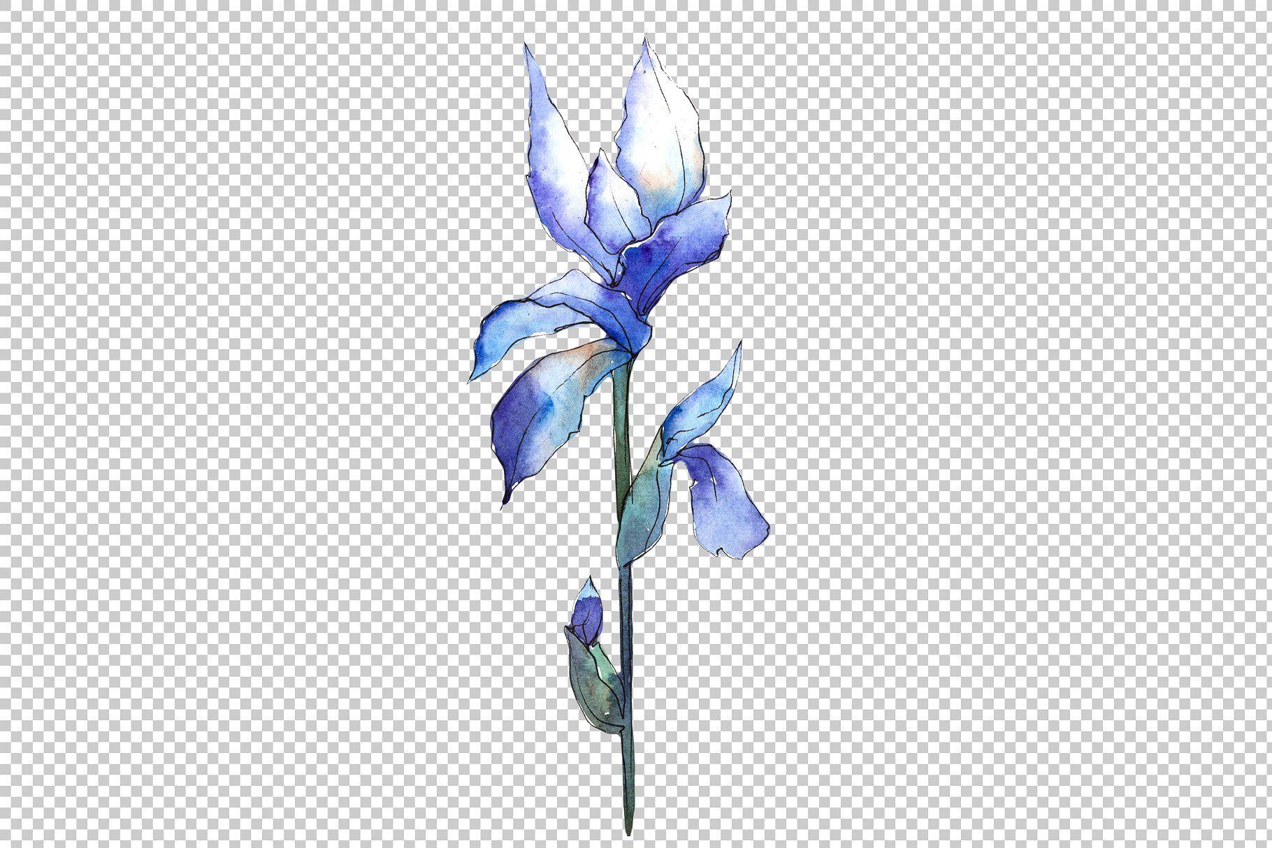 Watercolor Blue Irises Png Set Blue Iris Flowers Iris Flowers Iris