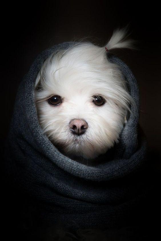 Süßes Hundewelpenportrait   Baby animals, Cute animals
