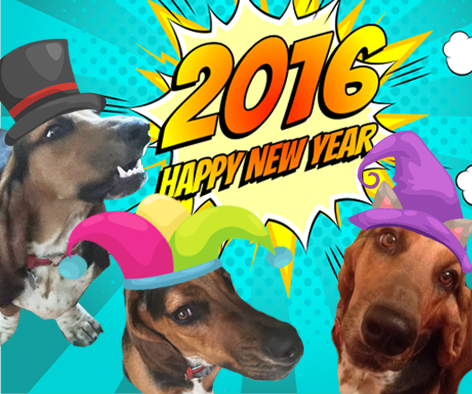Happy New Year from Donna Maguire & Winston, AKA Silly Willy Winston