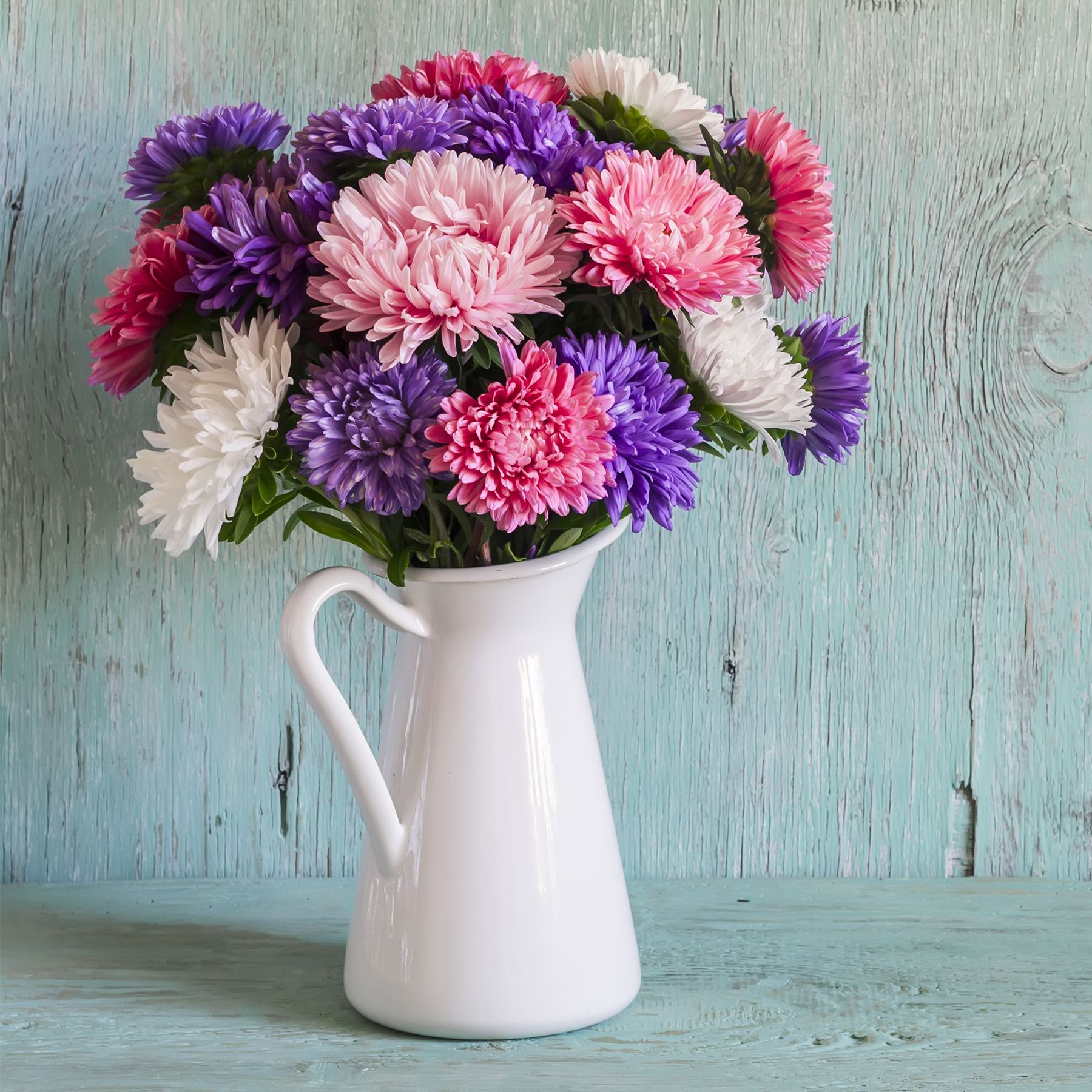 The Aster Flower Carries A Variety Of Meanings But In General The Flower Mainly Represents Love Wisdom In 2020 Aster Flower Flower Delivery Flower Delivery Service