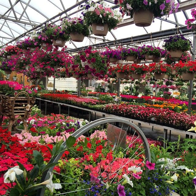 Spent Quality Time With Mom At The Local Garden Center We Went To