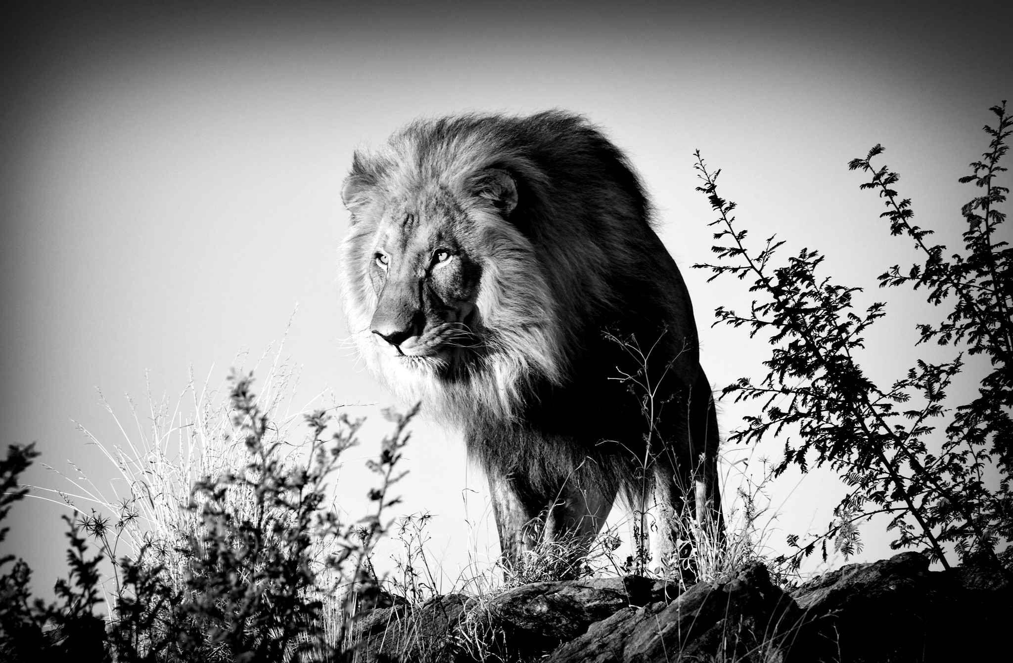 Célèbre La vie sauvage en noir et blanc | Art and more☀ | Pinterest  UM39