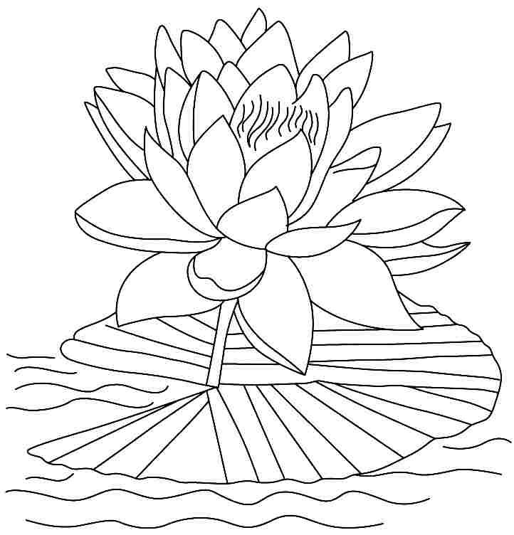 printable lotus flowers coloring sheets for kindergarten - Lotus Flower Coloring Pages