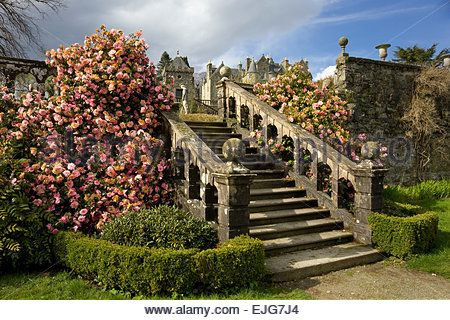 torosay castle steps with camelias - Stock Image