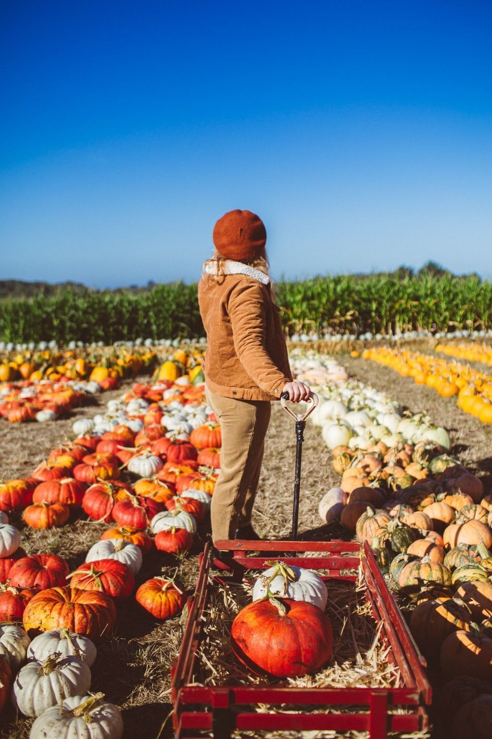 OH MY GOURD, These Are The Cutest Pumpkin Patch Outfit Ideas EVER #pumpkinpatchoutfitwomen I found the most charming Half Moon Bay Pumpkin patch for day date hunting from the city! Put on a cute pumpkin patch outfit & drove down to the farm called #pumpkinpatch OH MY GOURD, These Are The Cutest Pumpkin Patch Outfit Ideas EVER #pumpkinpatchoutfitwomen I found the most charming Half Moon Bay Pumpkin patch for day date hunting from the city! Put on a cute pumpkin patch outfit & drove down to the fa #pumpkinpatchoutfitwomen