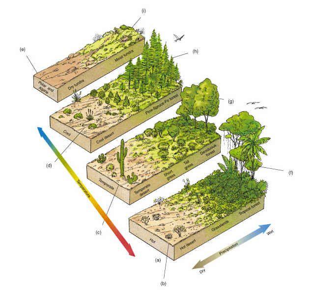 Ecosystem Diagram   rainforest ecosystem diagram   Thema