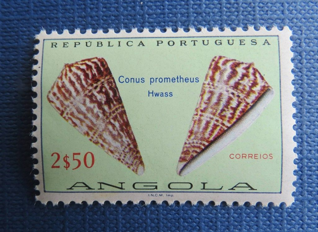 Conus Prometheus . Angola . http://www.arcadedarwin.com/2013/07/02/buzios-e-conchas-selos-angola/