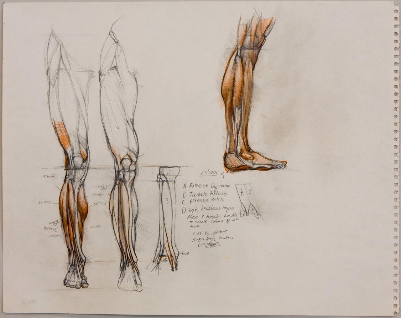 Welcome   Artists - Sabin Howard   Pinterest   Anatomía, Anatomía ...