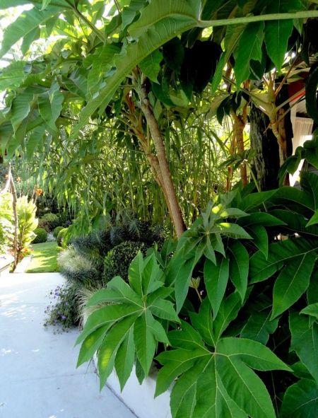 des plantes pour un jardin l 39 ombre cl ture jardin. Black Bedroom Furniture Sets. Home Design Ideas