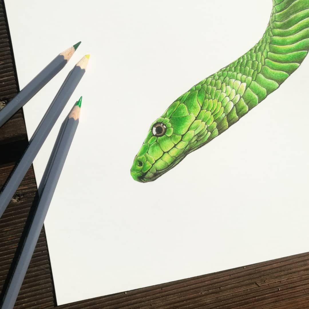 Mamba Vert Aux Crayons De Couleurs Colourpencil Colourpencils