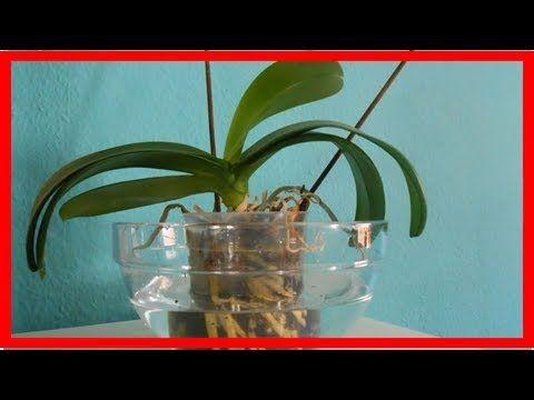 Orchideen pflegen: Standort, Schneiden und Gießen