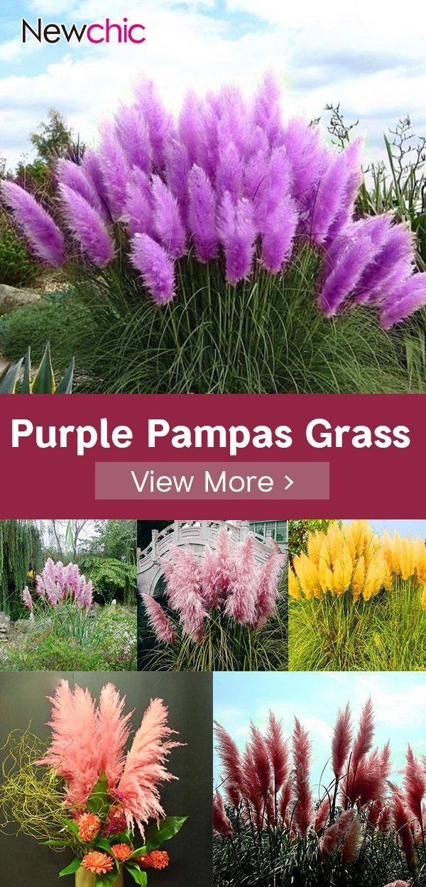 Latest Snap Shots Garden Pots Grasses Tips There Are Actually Almost Numerous Approaches For Planting Garden Pots And Urn Garden Seeds Plants Ornamental Plants
