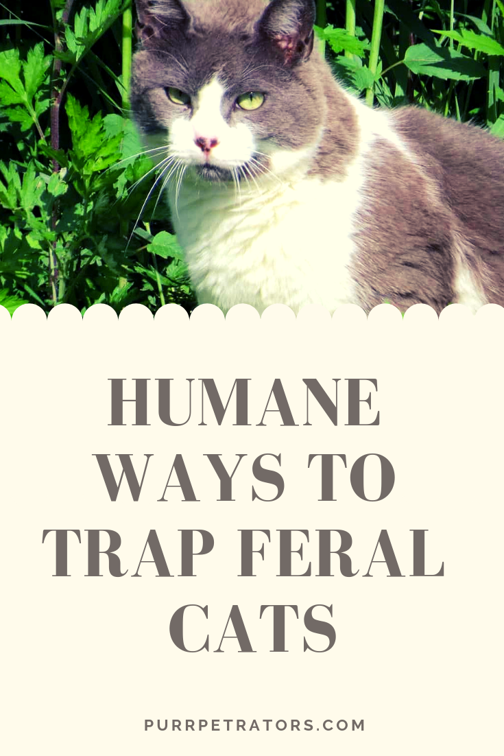 Feral Cats Traps Humane Ways To Trap Feral Cats Feral Cats Cat Traps Feral Kittens