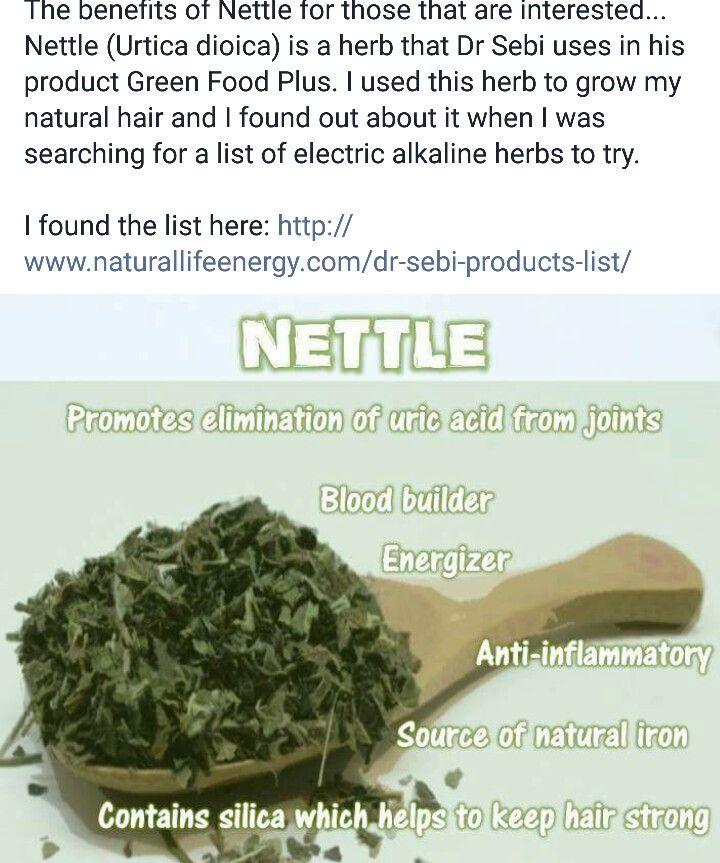 Nettle | Dr Sebi | Natural health remedies, Health remedies