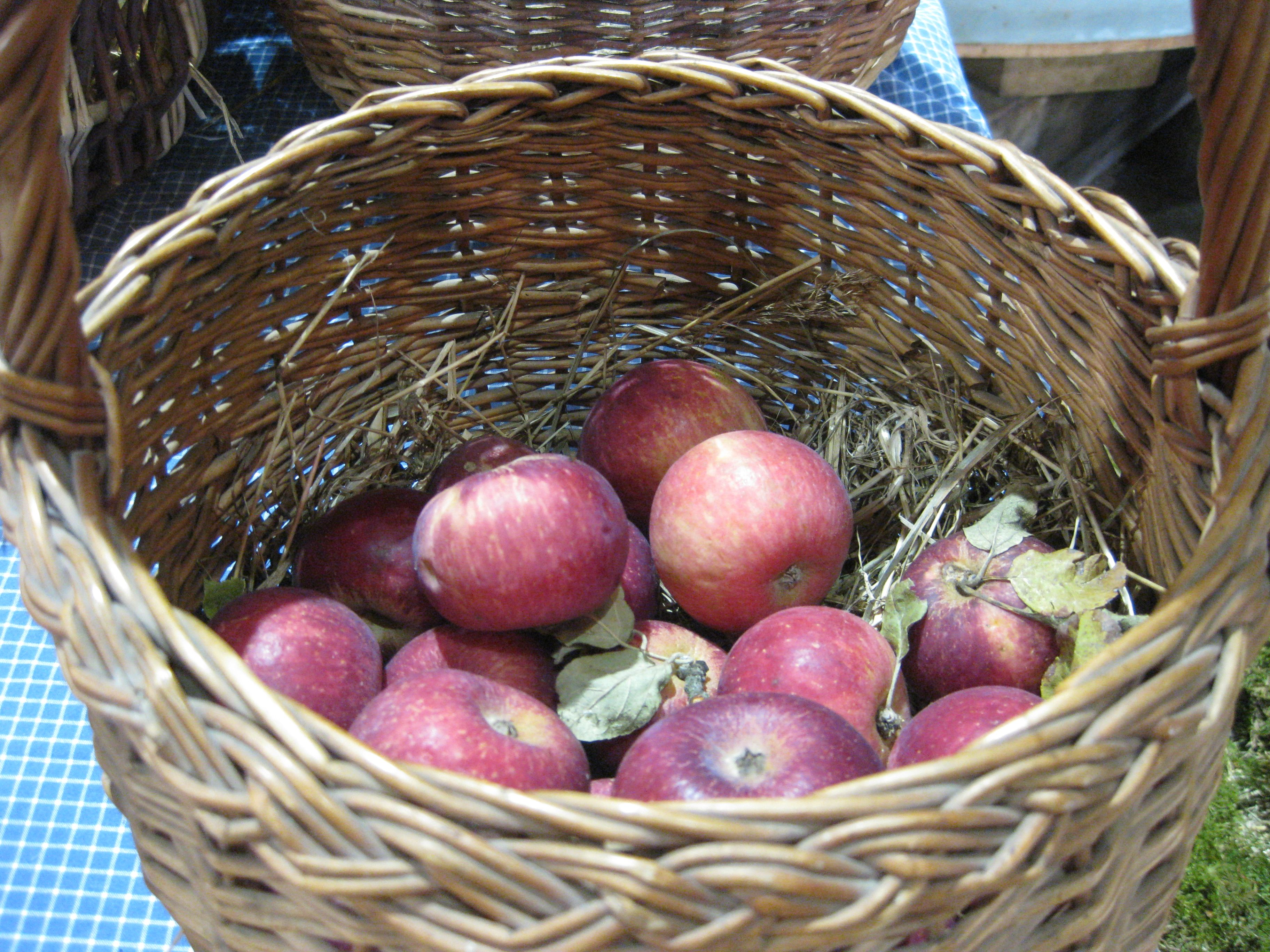 Organic crab apples in a basket