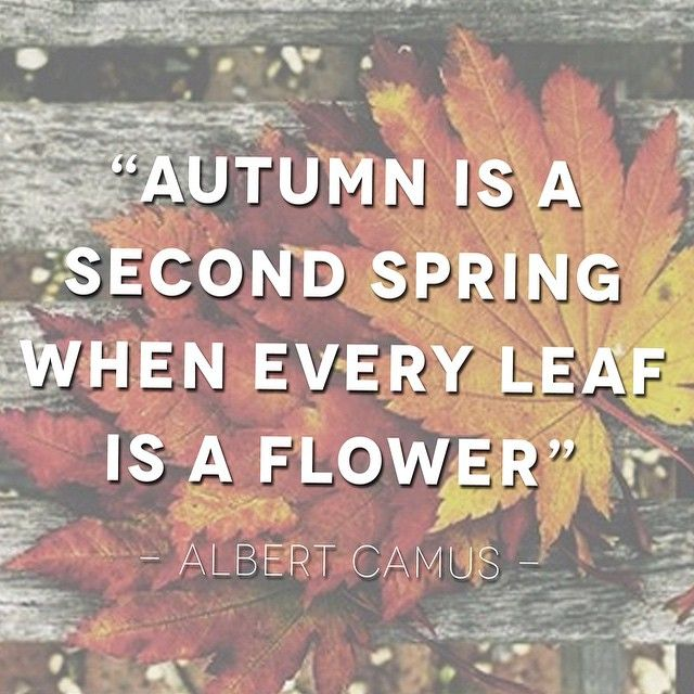 Cute Fall Quotes For Instagram: Limited Edition: Fall Fête Unboxing!