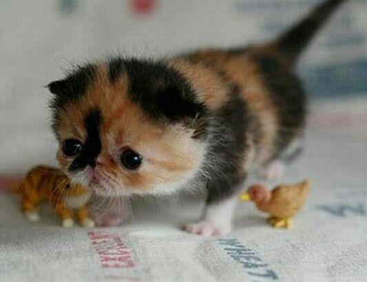 A little munchkin!!