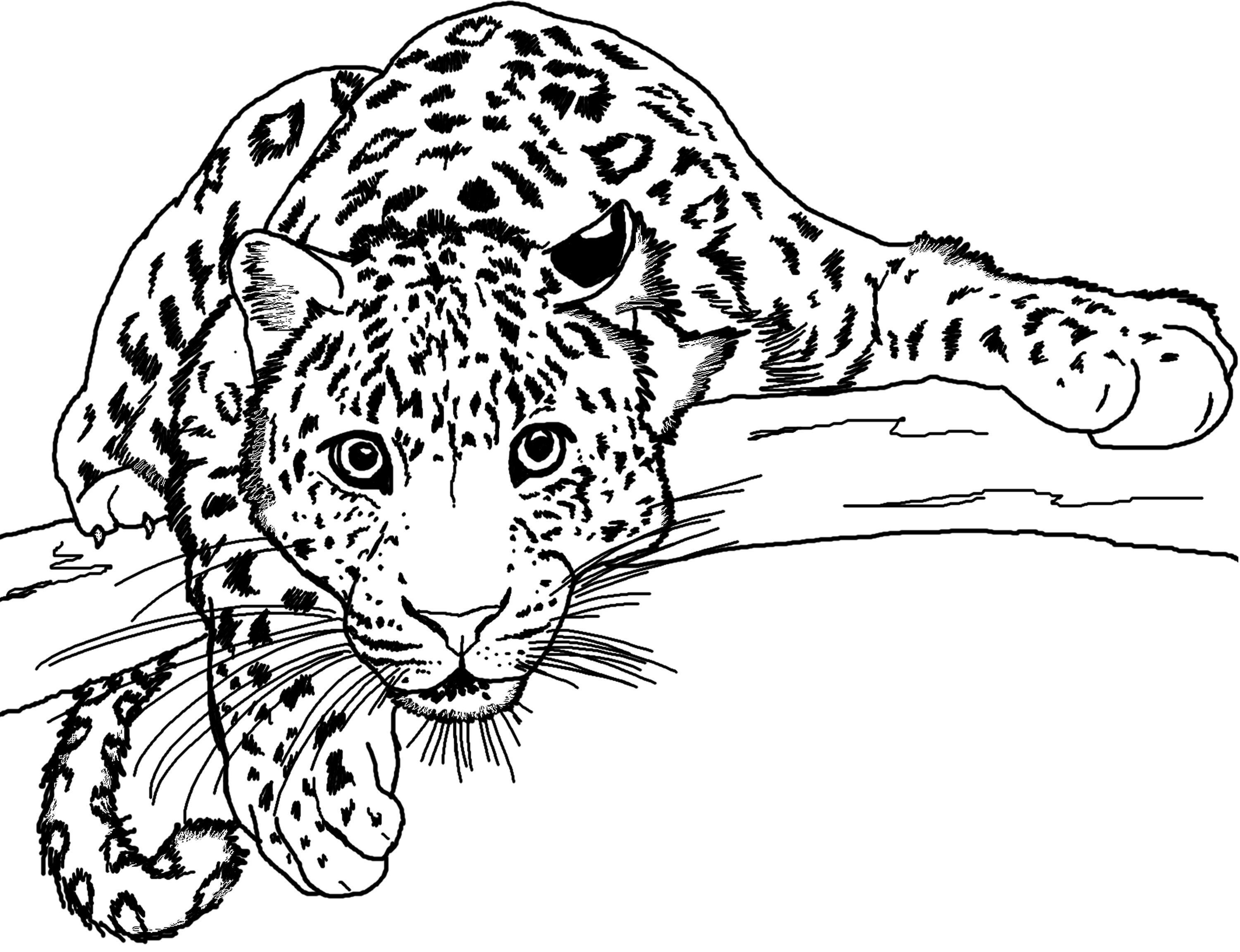 Printable Coloring Pages Of Animals For Adults Animal Coloring Pages Animal Coloring Books Coloring Pages