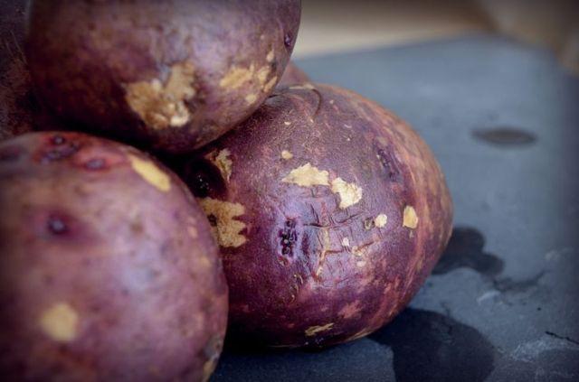 How to Grow Potatoes #Grow #Potatoes #growingpotatoes How to Grow Potatoes  #Grow #Potatoes #growingpotatoes