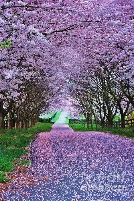 Virginia Plant Flower Nature Tree Garden Wonderful Magic Color Dream Putdownyourphone Pl Beautiful Nature Beautiful Landscapes Nature Photography