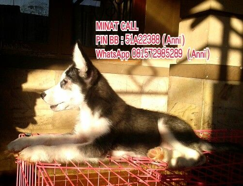Minat Call Pin Bb 51a22388 Anni Whatsapp 081572985289 Anni