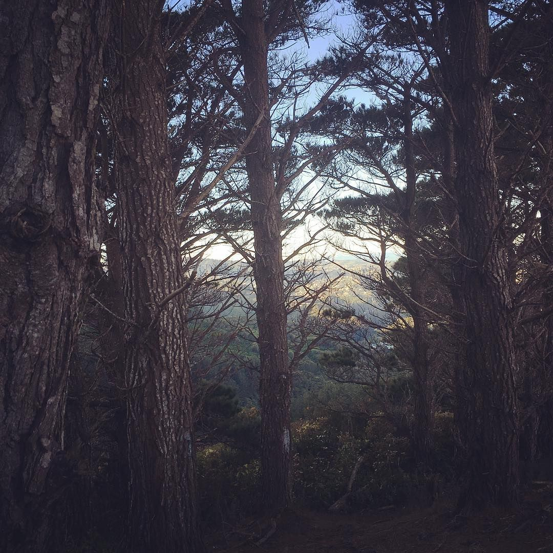 """""""The woods are lovely, dark and deep..."""" #trees #woods #forest #throughthewoods #path #walk #karori #johnstonhill"""