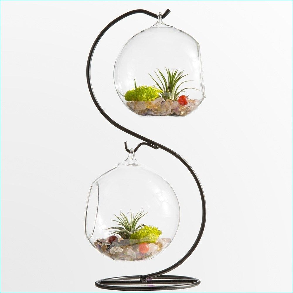 38 beautiful air plant glass containers wire ideas