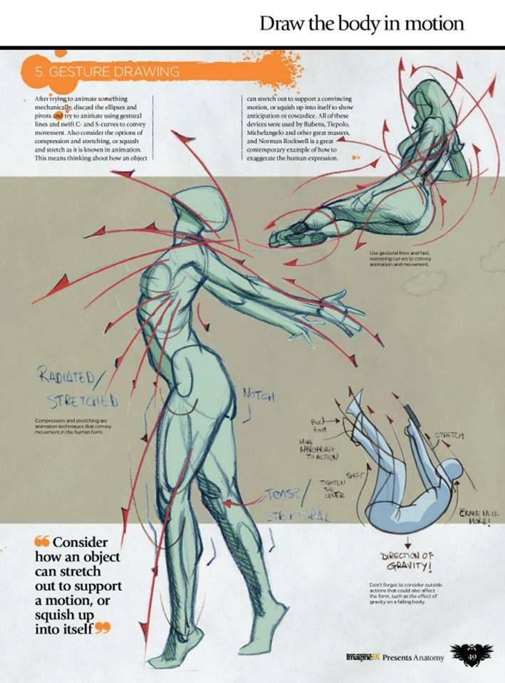 Pin de Nina en art   Pinterest   Anatomía, Dibujo y Bocetos