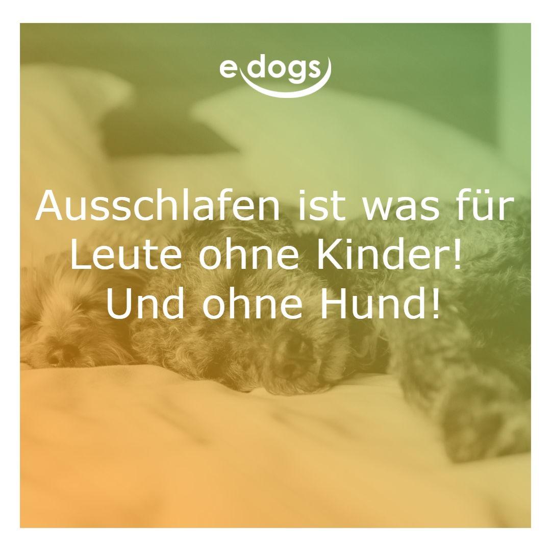 Das wars mit schlafen! Finde deinen Traumhund bei edogs.de ...