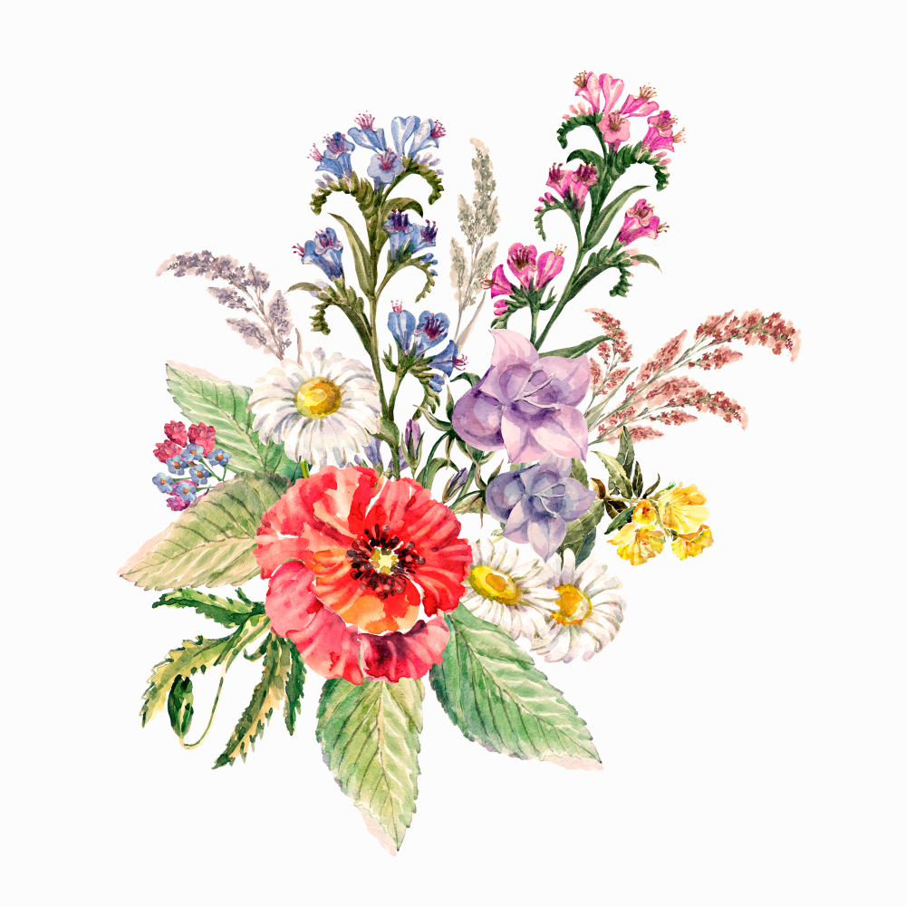 Pin By Vipul Chaudhari On Flawar Flower Bouquet Drawing Botanical Flowers Watercolor Illustration