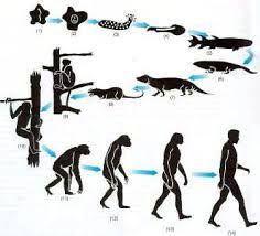 La Evolucion Del Hombre Evolution Art Human Evolution Human Fossils