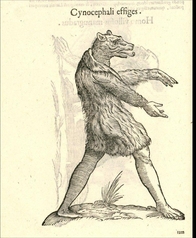 Animal Bear Loup Garou Creature Etrange Art Graphique