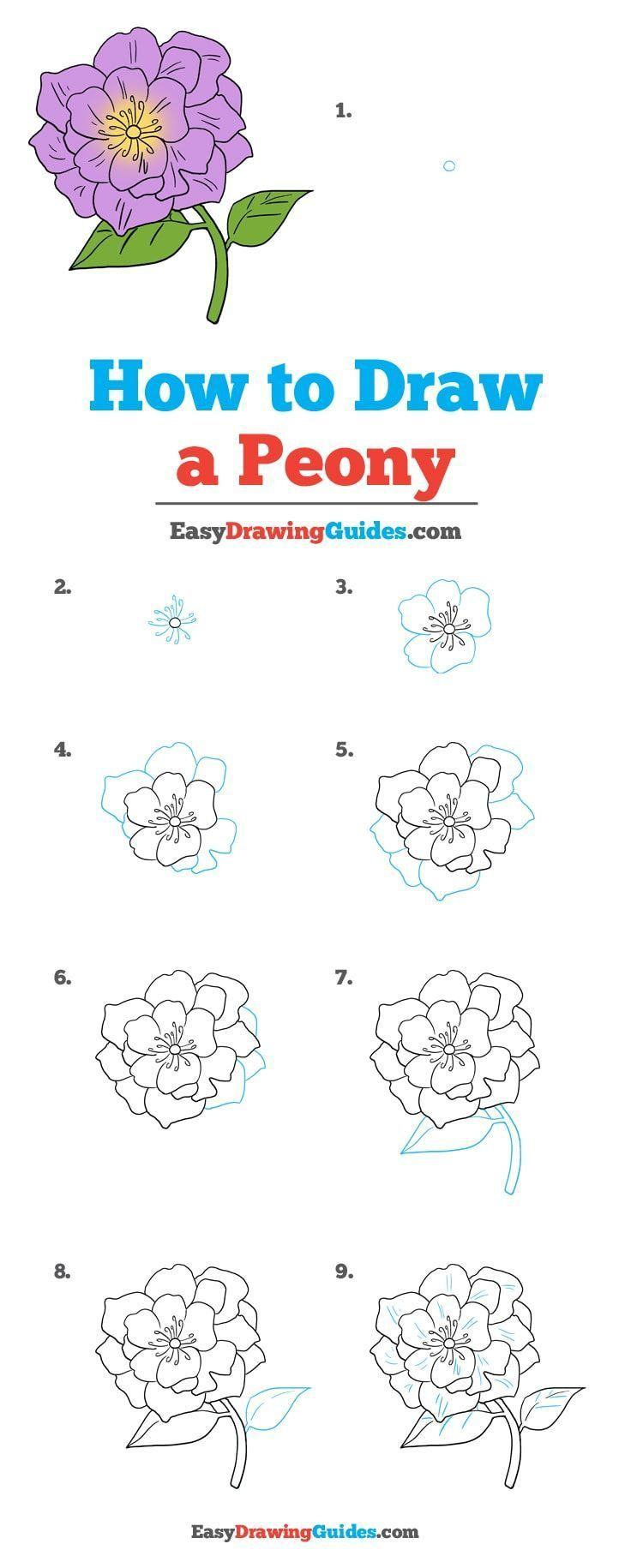 How to Draw a Peony | Flower drawing tutorials, Peony ...