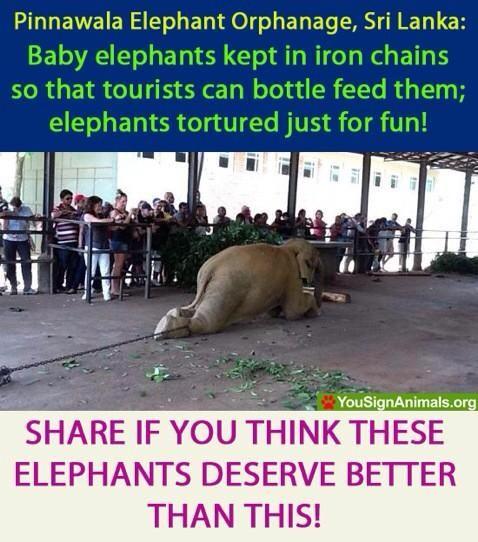 Demand better conditions at the Pinnawala Elephant Orphanage, Sri Lanka!