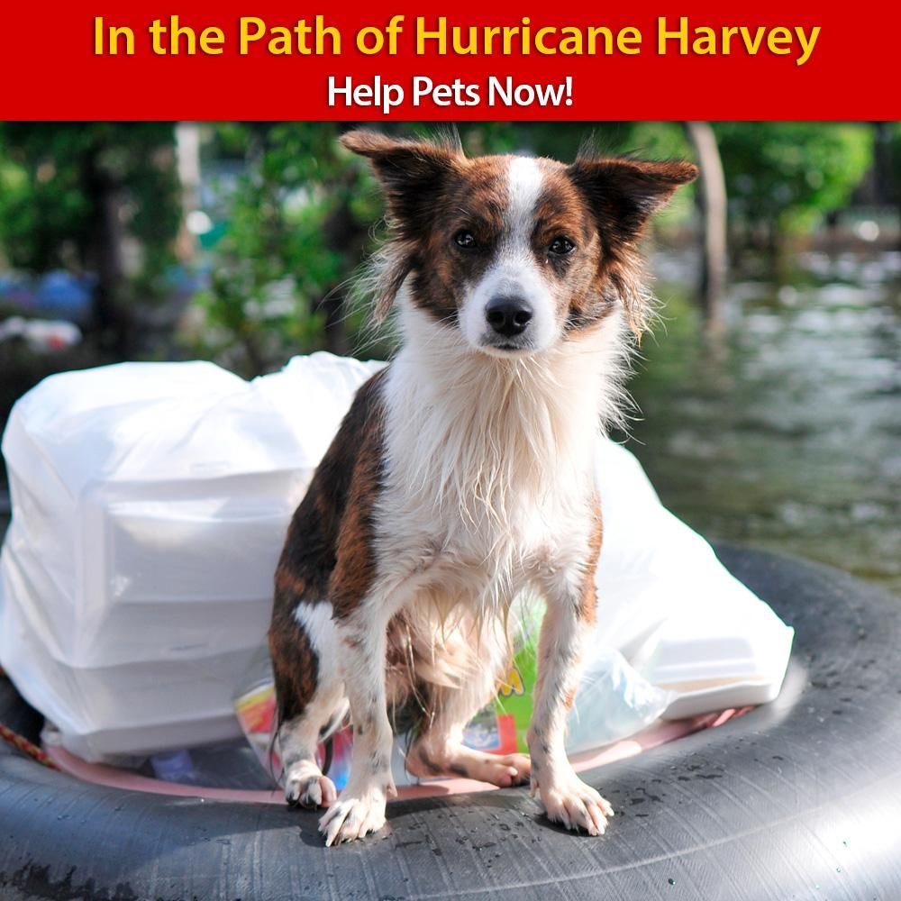 Hurricane Harvey Help Animals Now The Animal Rescue Site For Just 5 00 Animal Rescue Site Animals Pets