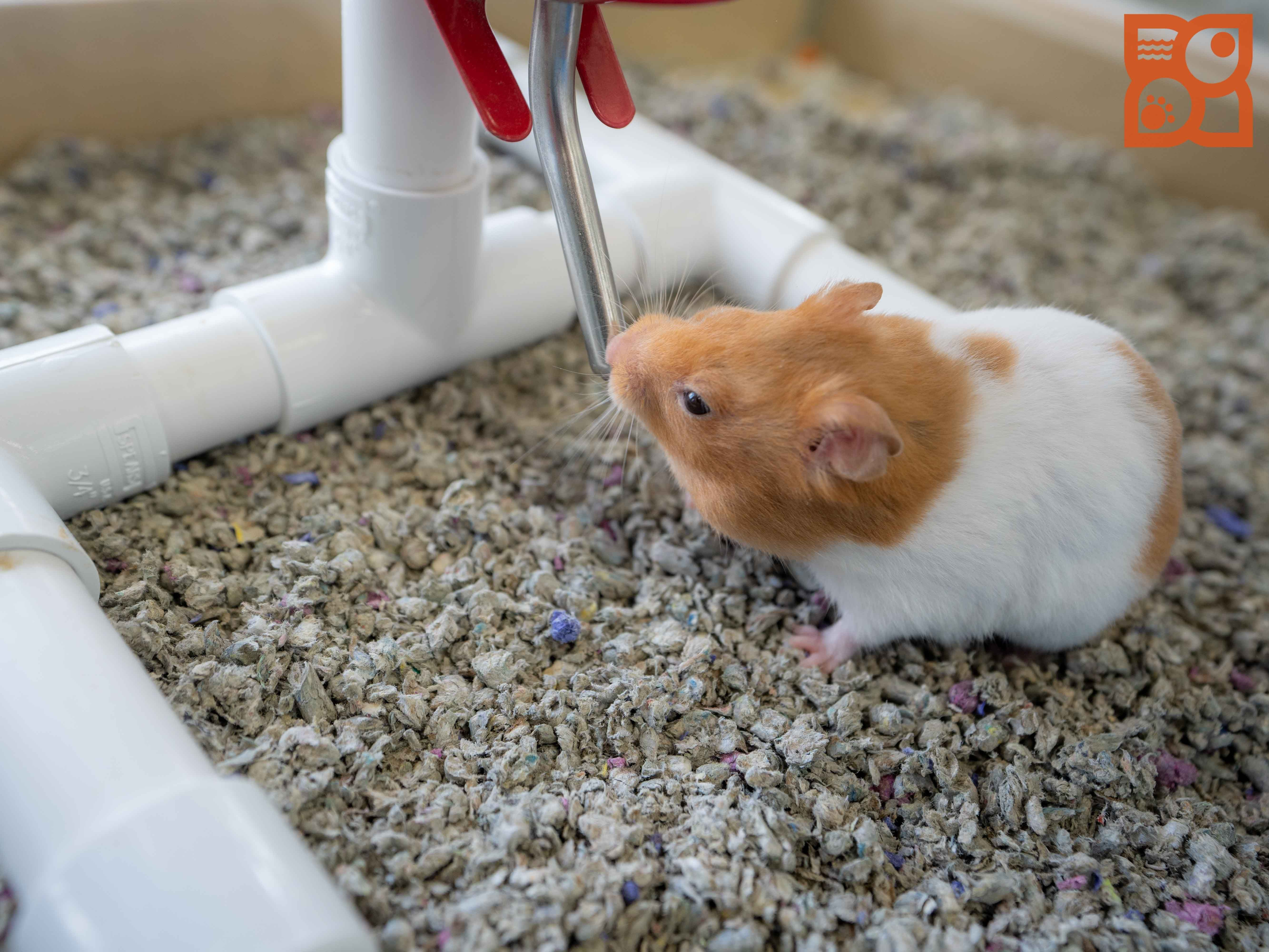 Puppies For Sale Hamster Species Hamster Life Fun Facts