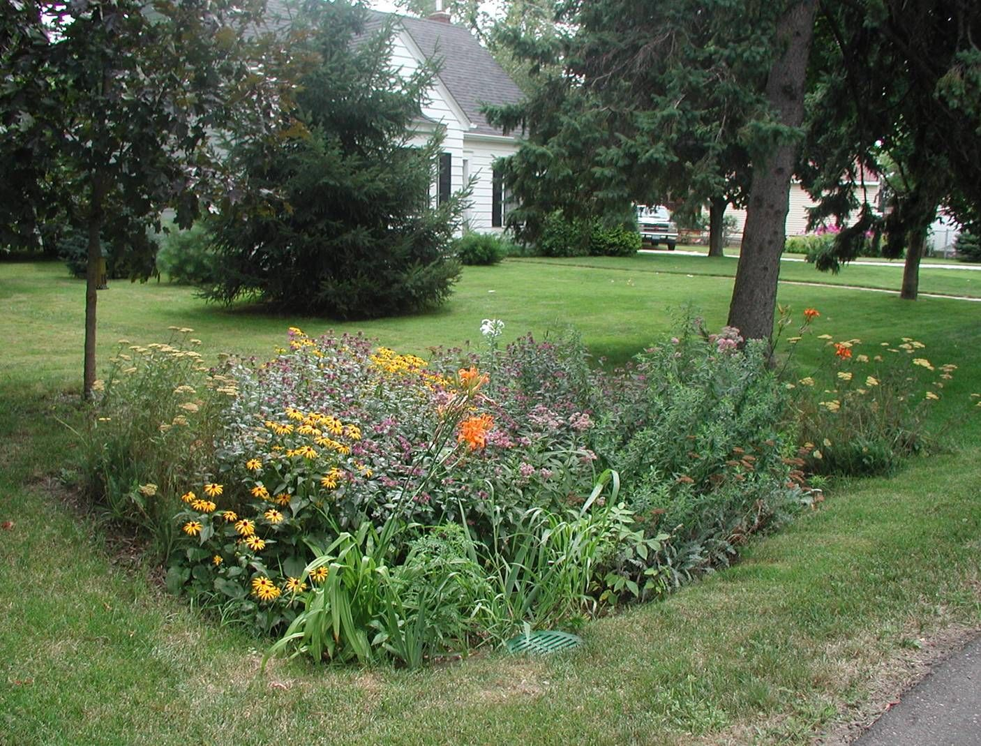 A native plant rain garden is a beautiful way of enhancing your ...
