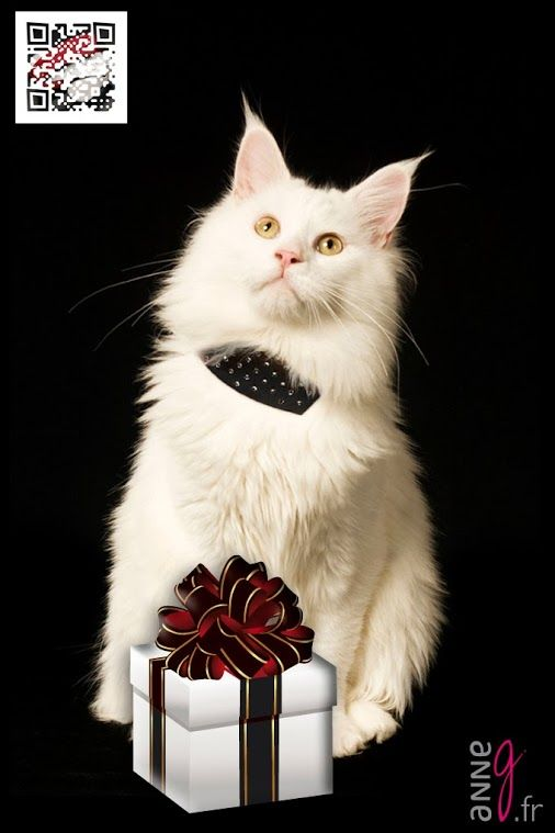 Christmas is close... Did you think about the gift of your cat ? www.anneg.fr/en/petshop  #maincoon #cat #caturday #catlovers #catlove #chat #noel2013 #noel #xmas #christmas #christmas2013 #christmasgifts #women #woman #womansfashion #fashion #mode #swarovski #swarovskijewelry #swarovskielements #swarovskicrystals