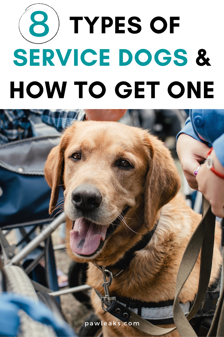 8 Types Of Service Dogs How To Get One Therapy Dogs Psychiatric Service Dog Therapy Dog Training