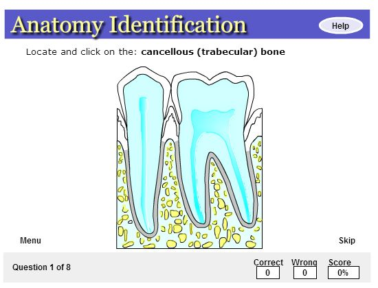 Pearson Education Interactive Intraoral Radiographic Anatomy Pearson Education Anatomy This Or That Questions