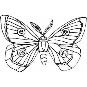 Https Cdn Freeprintablecoloringpages Net Samples Insects Moth Png Butterfly Coloring Page Coloring Pages Printable Coloring Pages
