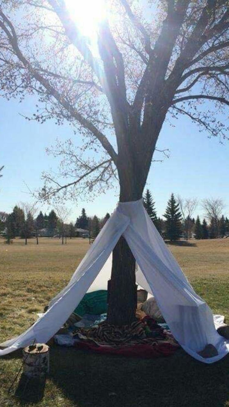 Tree sanctuary reading hideout