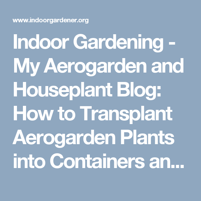How To Transplant Aerogarden Plants Into Containers And 400 x 300