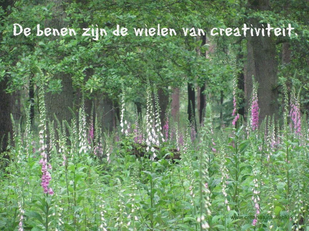 Citaten Creativiteit : De benen zijn wielen van creativiteit wandelspreuken