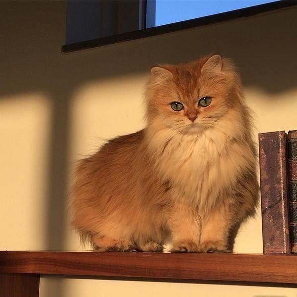 Pin Von Anna Eckert Auf Cozy In 2020 Schonen Katzen Susse Tiere Niedliche Tiere