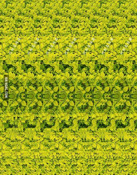 3d Effect Image 1 Place Image On The Tip Of Your Nose 2 Slowly Move It Away 3 You Can See A 3d Image Of An Animal Magic Eye Pictures Eye Illusions
